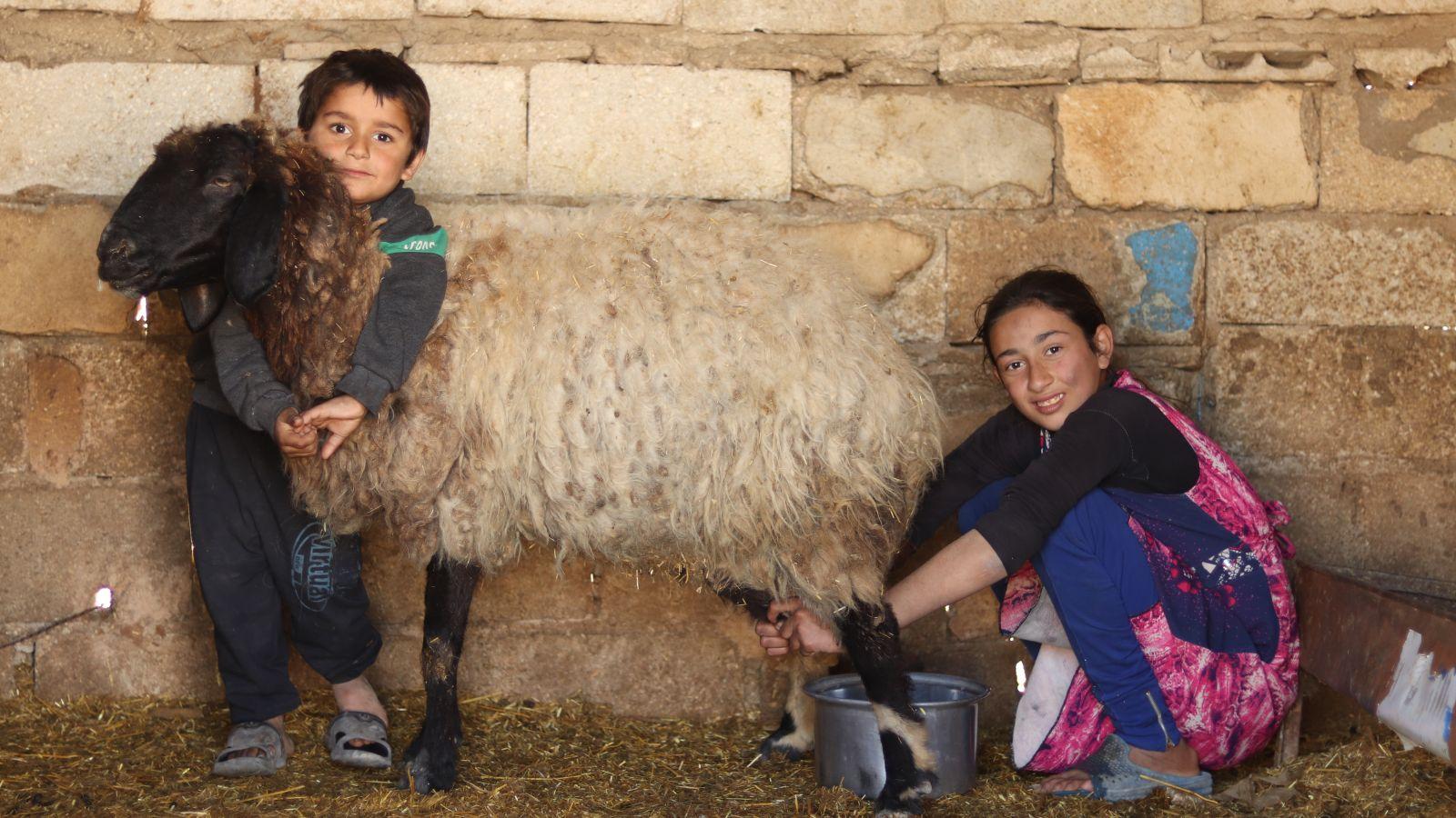 children-syria-emergency